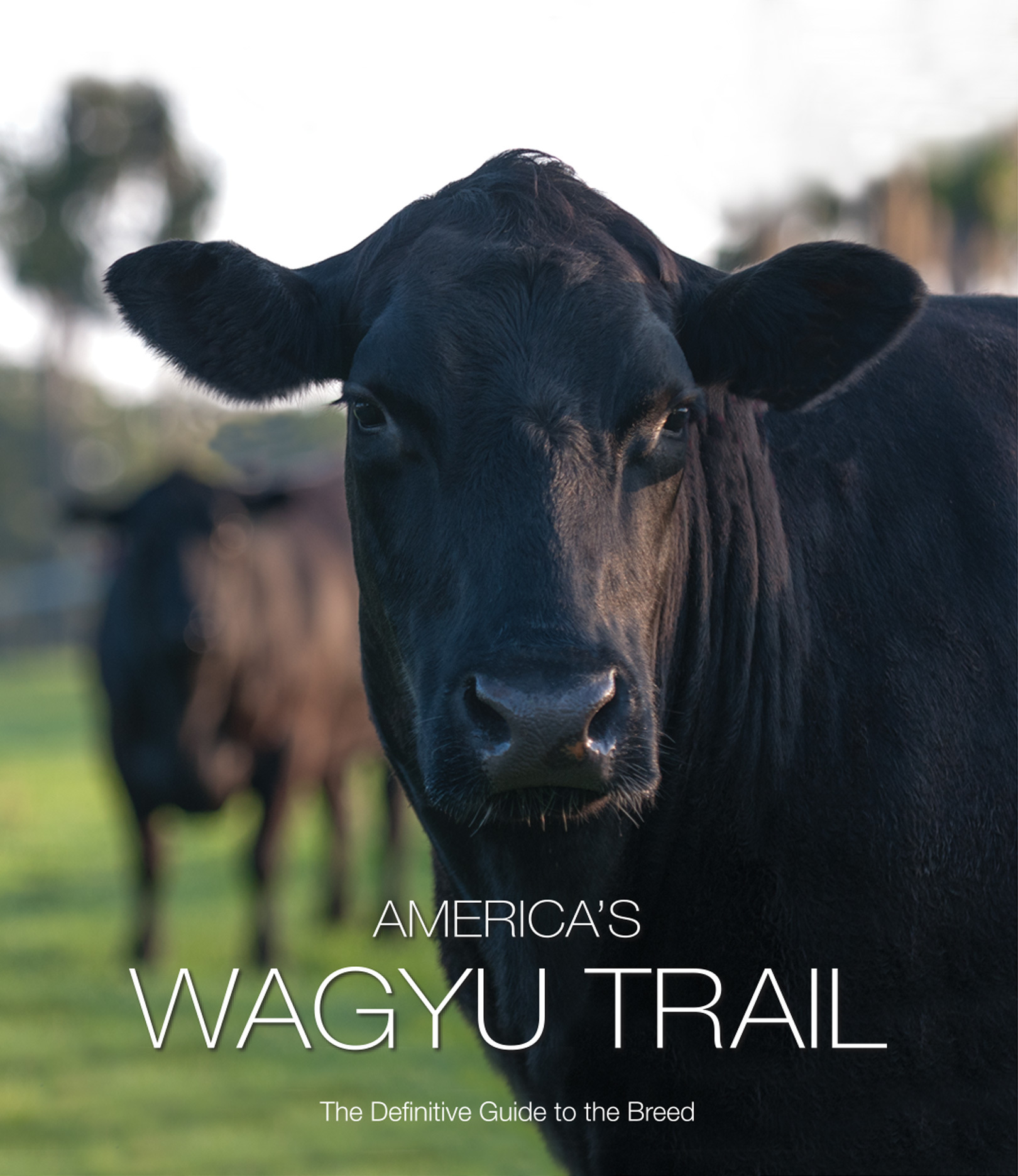 Wagyu Feature