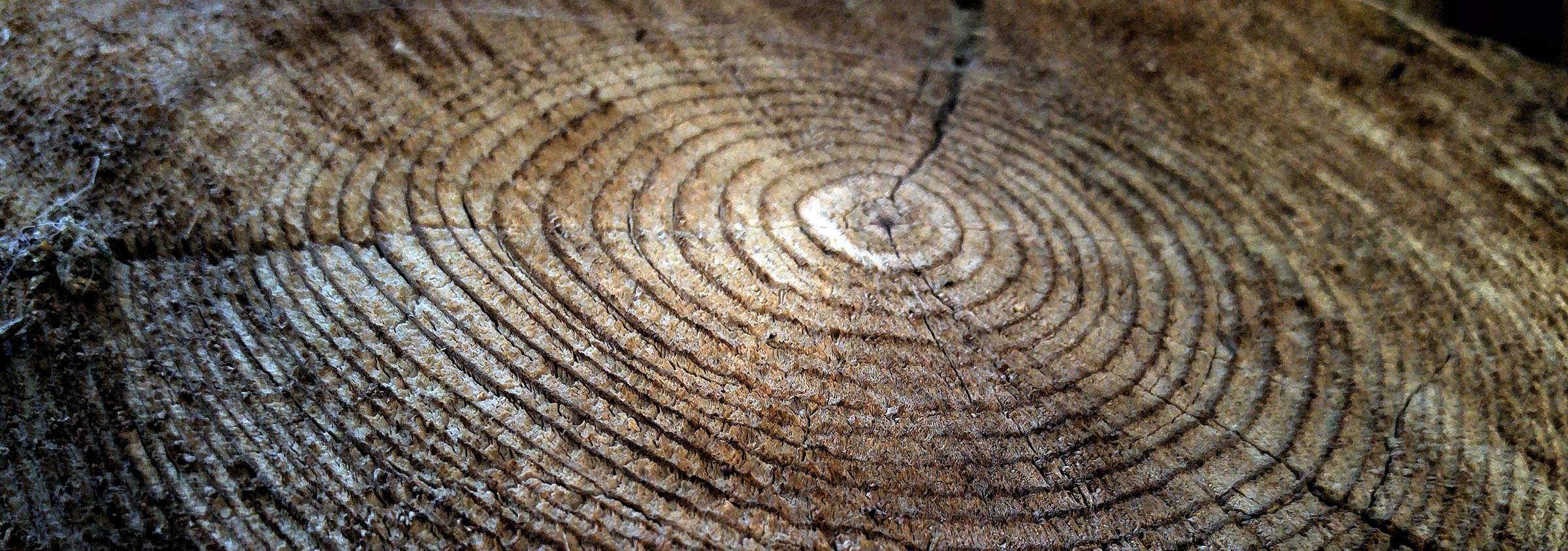 tight shot of a tree trunk with the bands