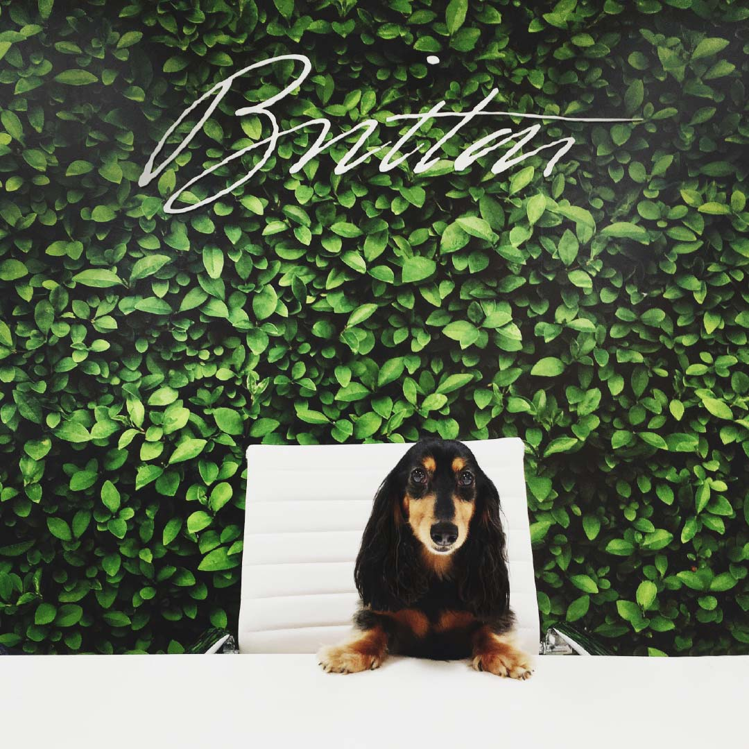 dog sitting on desk chair in front of ivy wall